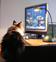 cat-at-computer.jpg