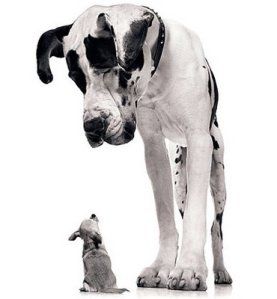 little dog and big dog